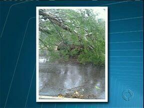 Chuva e vento forte derrubam árvore sobre carros em Paraíso do Norte - O acidente aconteceu na tarde desta quarta-feira (09) no centro da cidade.
