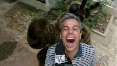 Otaviano Costa brinca de ser atacado por aranha - Apresentador se diverte pelo Projac
