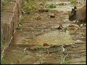 Bauru tem 550 vazamentos de água nas ruas registrados pelo DAE - Em um cálculo rápido, se em aproximadamente 10 segundos se perde uma média de cinco litros de água, em um dia, o desperdício pode chega a quase 43 mil litros. O DAE conta com 70 funcionários no setor de consertos.