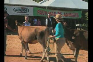 Boa Vista do Cadeado, RS, sedia feira da agricultura familiar - Na feira aconteceu a 2ª mostra da terneira e da novilha.