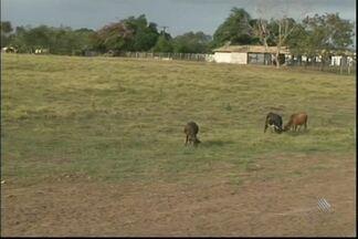 Mais de 420 mil pessoas sofrem com a seca na Bahia - Confira no giro especial sobre a seca.