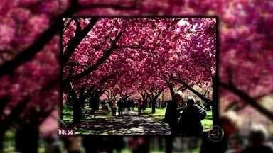 Ana Maria mostra romantismo da primavera de Nova Iorque - Cerejeiras colorem o Central Park e o Jardim Botânico do Brooklyn