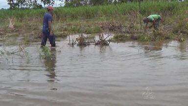 Produtores do Médio Solimões, no AM, são afetados pela cheia - Na agricultura, produtores enfrentam a água para não perderem a produção.