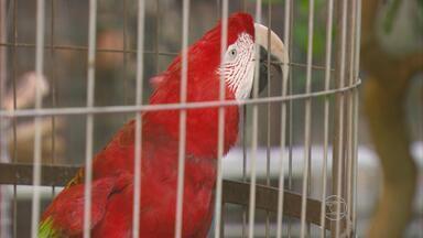 Centro de triagem de animais silvestres do Ibama vai deixar o bairro de Casa Forte, Recife - Unidade será instalada no bairro da Guabiraba.