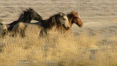 Produção do Globo Repórter apresenta história de parceria entre homem e cavalo - Trabalho foi feito em conjunto com a EPTV.