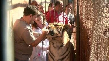 Ibama fiscaliza canil onde são criados tigres em Maringá - A fiscalização foi feita a pedido da Justiça