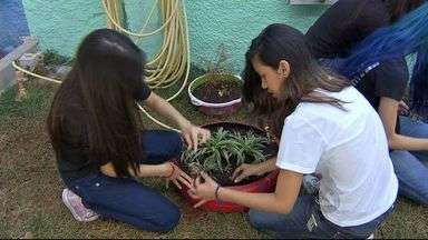 Escola ensina alunos sobre a importância de preservar a natureza - Dia 5 de junho é comemorado o Dia do Meio Ambiente. Veja como estudantes aprendem a cuidar da natureza