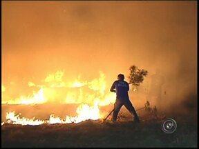 Autoridades criam força-tarefa para combater queimadas no noroeste paulista - 15 queimadas em plantações e 49 em terrenos baldios foram registradas neste fim de semana na região de São José do Rio Preto (SP), Catanduva (SP) e Fernandópolis (SP). A operação Corta-Fogo é realizada como forma de combate aos incêndios.