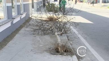 Mulher morre atropelada na calçada quando voltava do trabalho, em Jacareí, SP - Motorista que provocou o acidente fugiu. Polícia investiga o caso.