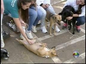 Hospital veterinário oferece animais para adoção - Evento ocorre até a tarde desta terça-feira (10).