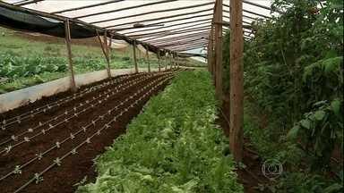 Chuva prejudica o trabalho de agricultores do RS - Agricultores do Rio Grande do Sul estão tendo dificuldades para recuperar as propriedades após as chuvas e enchentes.