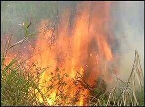 Governo do TO decreta estado de emergência por causa das queimadas - Governo do TO decreta estado de emergência por causa das queimadas.