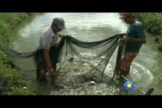 O quadro Paraíba Rural de hoje foi até Bananeiras para mostrar a produção de peixes - A atividade tem se destacado na Paraíba e é a principal fonte encônomica da cidade, abastecendo o mercado da região e munícipios vizinhos.