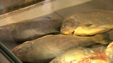 Diminuição na procura de peixes em Mato Grosso reflete nos preços do produto - A diminuição na procura de peixes em Mato Grosso refletiu nos preços do produto.