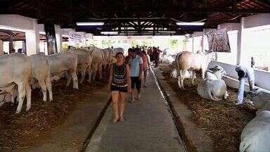 Termina neste domingo a ExpoCrato 2014; ainda dá tempo participar - Feira é uma das maiores de agronegócio do Ceará.