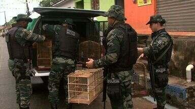 Aves silvestres criadas em cativeiro são apreendidas na Barra de Santo Antônio - Apreensão ocorreu durante fiscalização do Batalhão Ambiental.