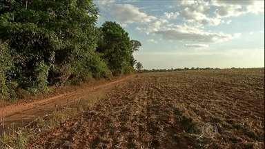 Aumenta o número de queimada em Mato Grosso - A preocupação dos agricultores do Mato Grosso, é que o foco atinja plantações prontas para a colheita.