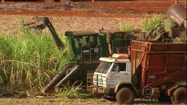 Setor sucroalcooleiro enfrenta uma das maiores crises da história - Nos últimos dois anos, setor de açúcar e etanol perdeu 60 mil empregos diretos. Acompanhe como está a situação no interior de São Paulo, Pernambuco e Minas.