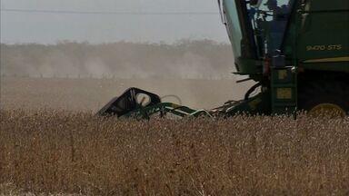 Tecnologia aprimora a produção de soja e milho do Ceará - Confira na reportagem de Thiago Meireles.