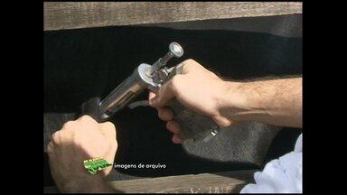 Ministério da Agricultura acaba com zona de proteção contra aftosa em cidades baianas - A determinação ministerial beneficia cerca de 10 mil criadores da região Norte da Bahia.