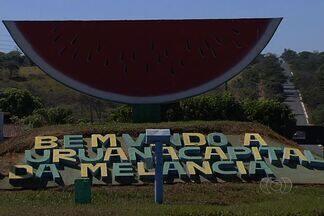 Produtores de melancia reduziram pela metade área plantada em Uruana - Vírus tem atacado as lavouras, causando prejuízos. Tempo seco facilita propagação da doença.