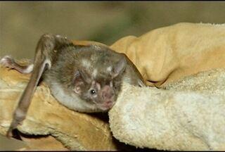 IMA alerta pecuaristas norte-mineiros sobre morcegos que transmitem a raiva - Casos de raiva aumentaram 32% em Minas Gerais