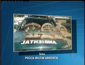 Passáros ameaçados de extinção são apreendidos em Saquarema, RJ - Dono dos animais foi autuado.