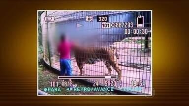 Menino é atacado por tigre em zoológico de Cascavel (PR) - As imagens feitas por visitantes do parque mostram primeiro o menino em uma área proibida, perto da jaula do leão. Depois, a criança passa a brincr na área proibida da jaula do tigre. Ele colocou o braço entre as grades, pouco antes do ataque.