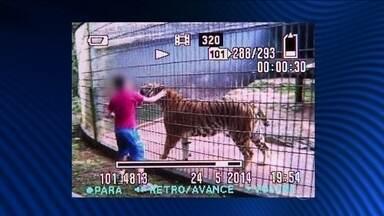 Polícia investiga negligência em caso de menino que teve braço dilacerado por tigre - O garoto se pendura na grade, corre de um lado para o outro e chega a pôr a mão dentro da jaula para tocar o tigre. O menino de 11 anos teve o braço dilacerado e foi levado para o hospital em estado grave.