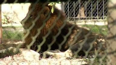 RJTV mostra como funciona segurança no zoológico de Volta Redonda - Imagem de um menino de 11 anos, que foi atacado no Paraná, chamou a atenção durante esta semana.