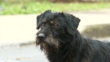 União da Vitória tem cerca de três mil cães pelas ruas - Os moradores estão incomodados com tanto cachorro perambulando pelas ruas da cidade.