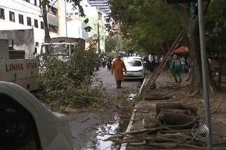 Três árvores caem durante a madrugada, em Salvador - Chuva e vento forte teriam causado as quedas.