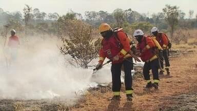 Bombeiros intensificam treinamento para enfrentar queimadas no DF - O curso deste ano vai aumentar em 10% o número de especialistas no combate aos incêndios ambientais no Distrito Federal. Só em agosto de 2014, já foram registradas 120 ocorrências de incêndio florestal em Brasília.