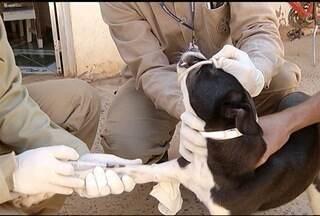 Começa a semana de combate a leishimaniose em Montes Claros - Objetivo é identificar os animais infectados.