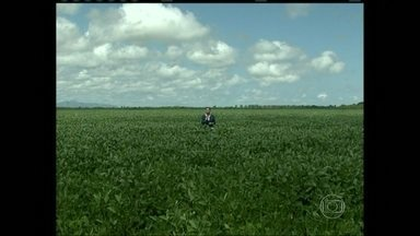 Produtores estão animados com o desenvolvimento das lavouras de soja em Roraima - Os produtores de Roraima estão contentes com o desenvolvimento das lavouras de soja. A cultura está em expansão no estado. a colheita da soja, em Roraima, começa em setembro.