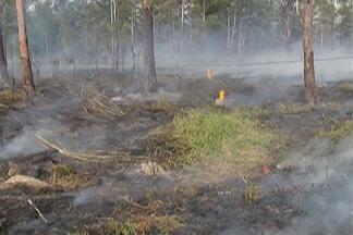 Fogo atinge terreno em César de Sousa, em Mogi das Cruzes - Equipe do Corpo de Bombeiros foi até o local para evitar que as chamas atinjam a rede elétrica.