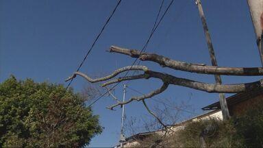 Árvore cai sobre fiação em Pouso Alegre (MG) - Árvore cai sobre fiação em Pouso Alegre (MG)