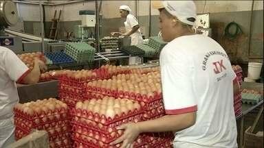 Produtores de São Paulo comemoram o bom preço pago pelos ovos vermelhos - Os produtores de ovos vermelhos, em São Paulo, comemoram a alta do preço. Já pra quem produz ovos brancos a situação não está tão boa.