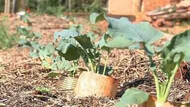 Produção orgânica é alternativa para evitar uso de agrotóxicos - Assista ao vídeo.
