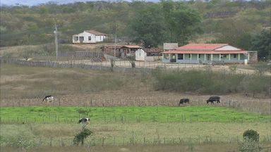 Quixeramobim é o município que possui o maior rebanho bovino do Ceará - Município também é o maior produtor de leite.
