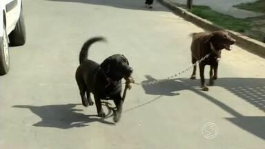 Independentes, cães 'parceiros' saem sozinhos para passear em Três Rios, RJ - Companheirismo de Sheik e Barão chama atenção dos vizinhos do dono dos animais.