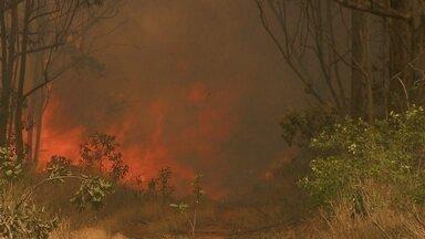 Incêndio destrói parte da Floresta Nacional de Brasília - Os animais se desesperaram com a propagação das chamas, que foram espalhadas pelo vento. O incêndio começou às 10h deste sábado (23). Apesar dos 70 homens dos bombeiros terem atuado rápido, as chamas levaram quatro horas para serem apagadas.