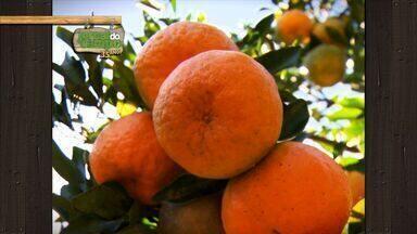 Jornal do Campo: Conheça a fruticultura do Espírito Santo - O Jornal do Campo é domingo, 7h, na TV Gazeta.