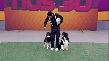 Lucas Marques apresenta habilidades de Pancho e Fênix - Cães arrasam no palco do programa