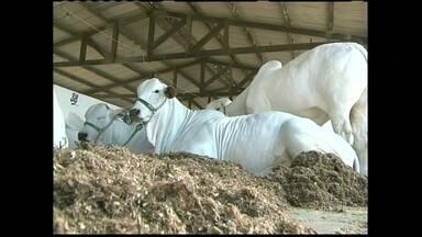 Exposição agropecuária em Feira de Santana (BA) atrai criadores de todo o Nordeste - Mais de mil animais, entre bovinos, caprinos, equinos e ovinos participam da 39ª edição da Expofeira. A expectativa é que o evento movimente mais de R$ 12 milhões em negócios.