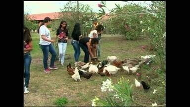 Turismo rural é atração no agreste pernambucano - Andar a cavalo, tirar o leite da vaca e alimentar os animais são apenas umas das atrações do hotel fazenda. Com a ajuda de consultorias ele melhora a gestão e cresce no mercado.
