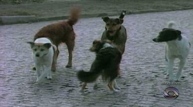 80 cachorros serão castrados gratuitamente em Rio Grande, RS - 350 famílias estão na lista para o procedimento.