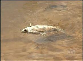 Nova mortandade de peixes é investigada no rio Lontra - Nova mortandade de peixes é investigada no rio Lontra