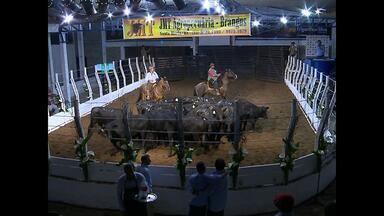 Começa hoje a 47ª Expofeira Agropecuária de Santa Maria, RS - Além de vendas e exposição de novidades no setor agrícola, a feira tem atrativos para o público em geral.