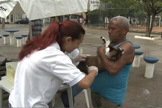 Começa campanha de vacinação antirrábica - A meta em Salvador é vacinar 130 mil cães.